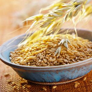 Oat Grains and Sheaf of Oats
