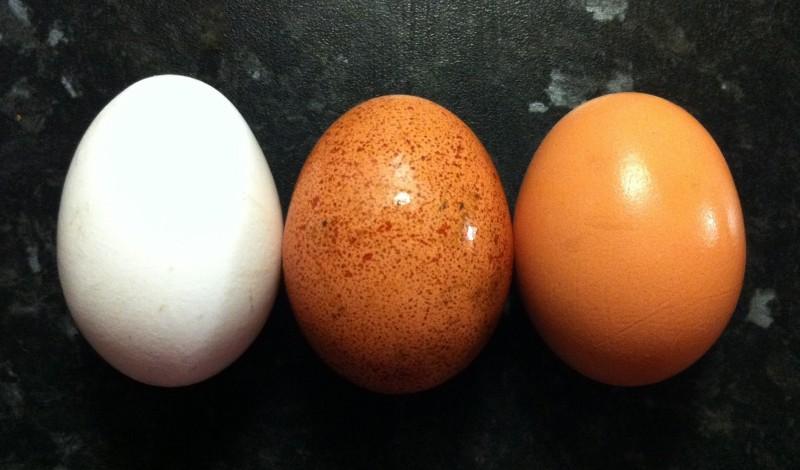 яйцо в фитнесе