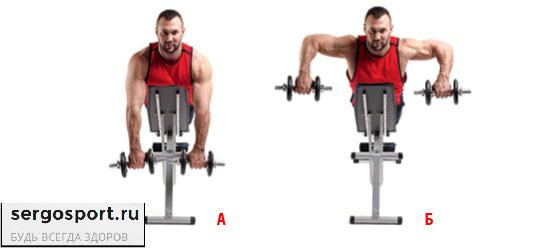 упражнение подьем гантелей лежа на животе для плечевых мышц