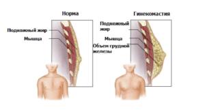 строение мужской груди