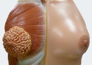 внешнее и внутренне проявление болезни