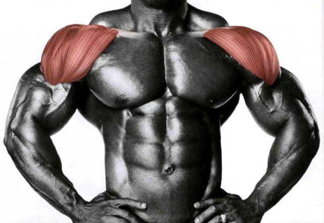 Упражнения для развития и укрепления плечевых мышц-передний пучок
