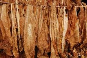 Особенности сушки табака в домашних условиях