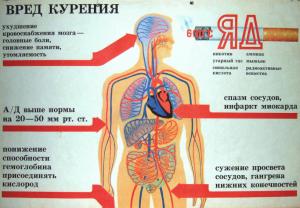 Влияние курения на дыхательную и кровеносную системы