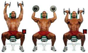 жим арнольда для плечевых мышц