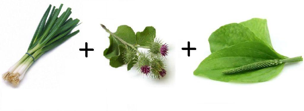 зеленый лук репейник подорожник