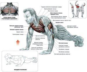 отжимание от пола для грудных мышц