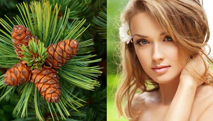 Кедровое масло в домашней косметологии: полезные рецепты