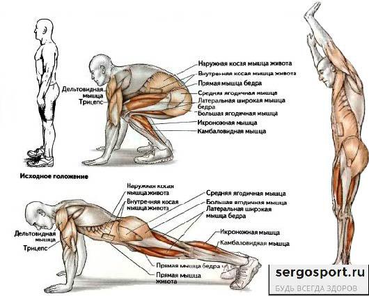 какие мышцы работают при выполнении бурпи