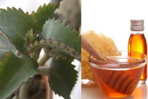 каланхоэ и мёд