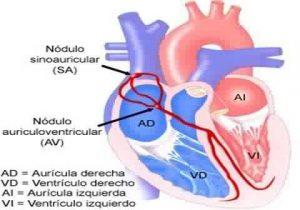 Аритмия сердца у женщин